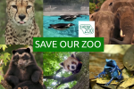 Save Our Zoo